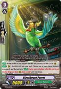 Blackboard Parrot