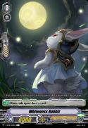 Whiteness Rabbit